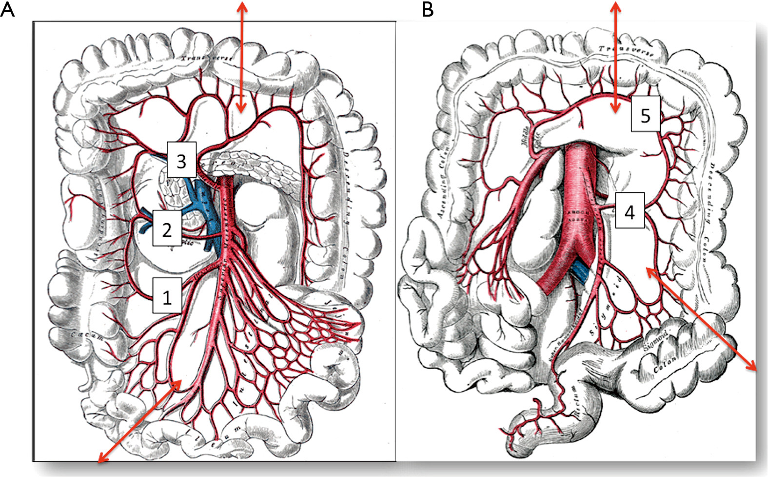 European perspective in Thoracic surgery—eso-coloplasty: when and ...