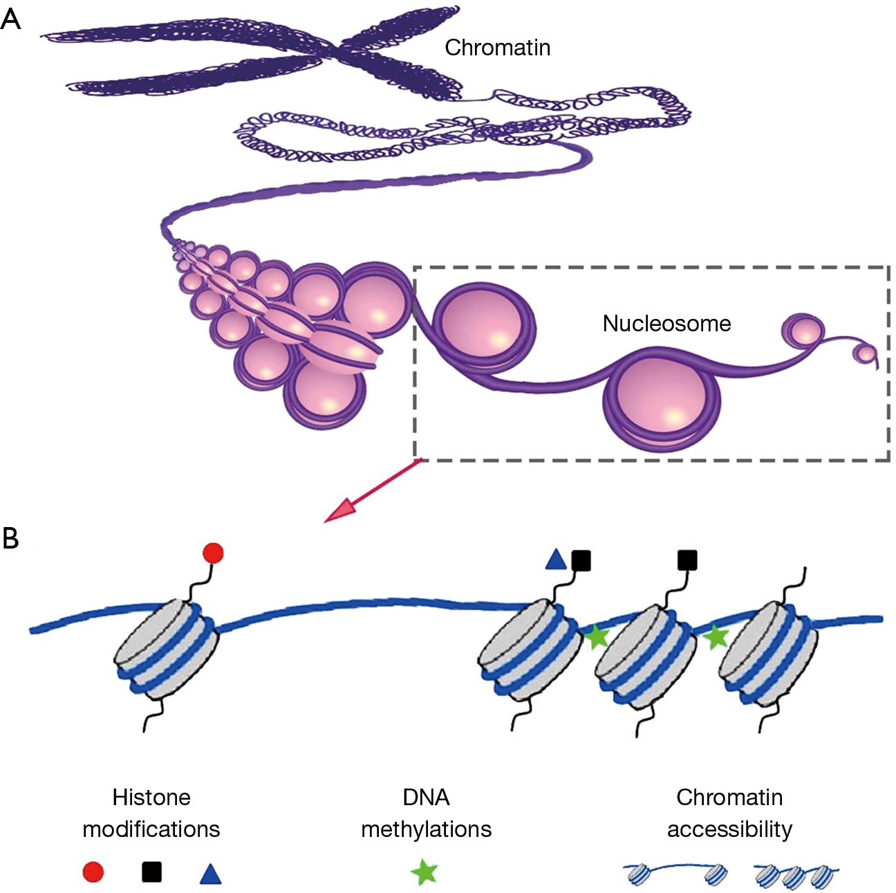 Strategies for the acquisition of transcriptional and