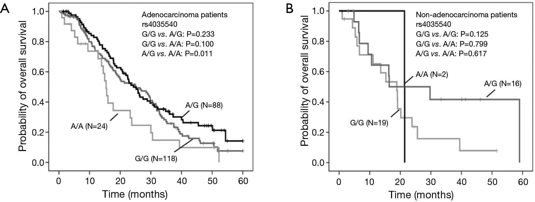 snps of abcg2 in chinese advanced nsclc patients Tyrosine kinase inhibitors in chinese advanced non-small cell lung cancer patients  in chinese advanced non-small cell lung cancer  snps associated with.